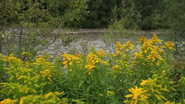 Wiese mit gelben Blumen